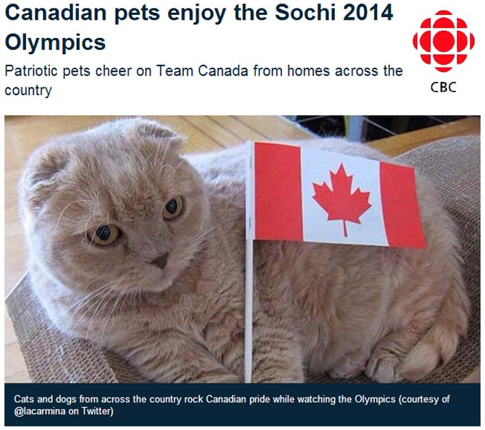 cbc olympics pet cats cheering