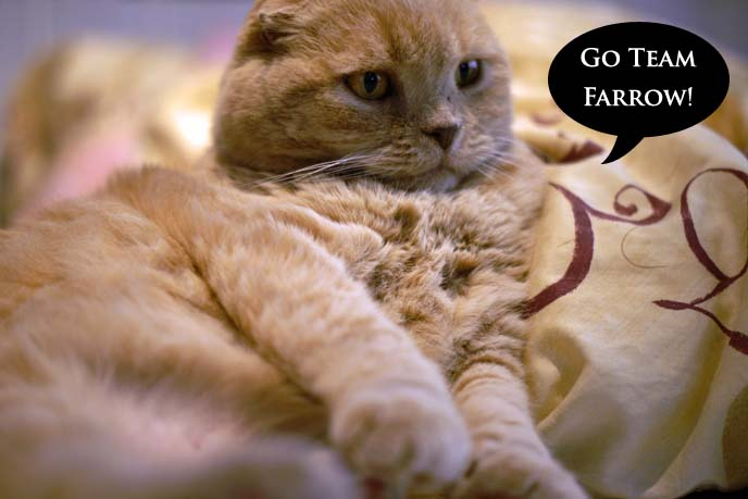 mia farrow pet cat