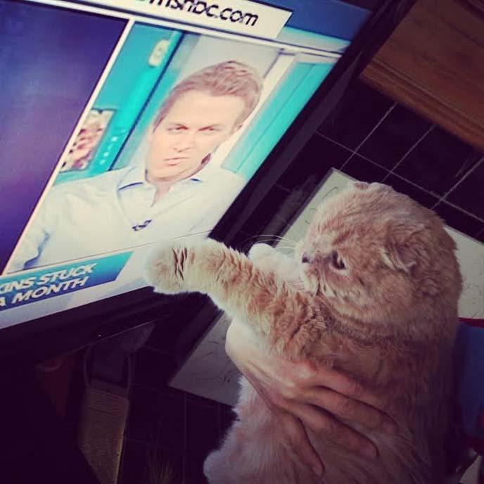 ronan farrow's cat watching msnbc