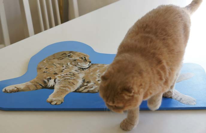 cat painted portraits