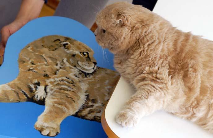 scottish fold cat art