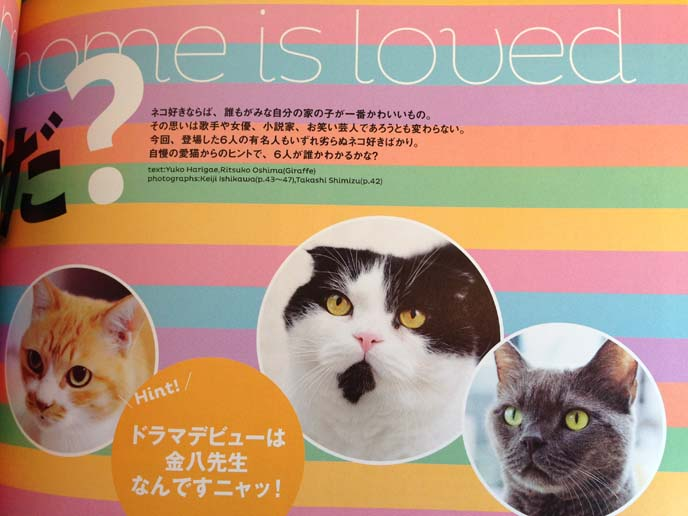 cat magazine layout