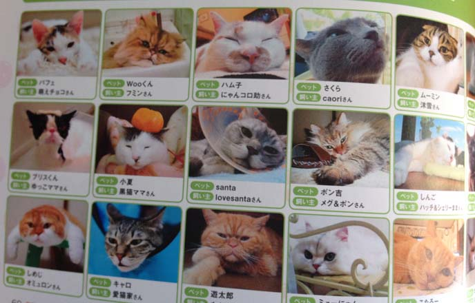 cat cafe menu portraits