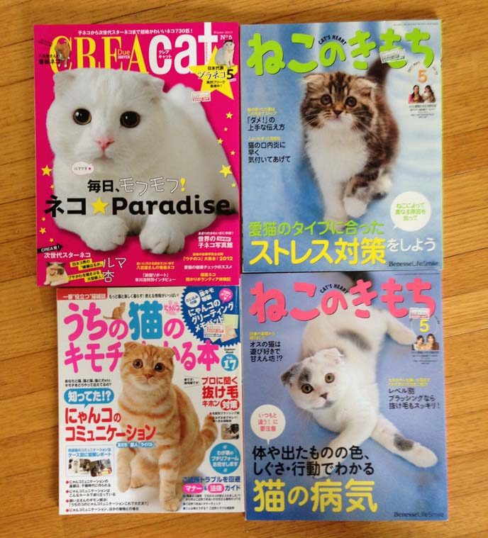 scottish fold cat magazine covers