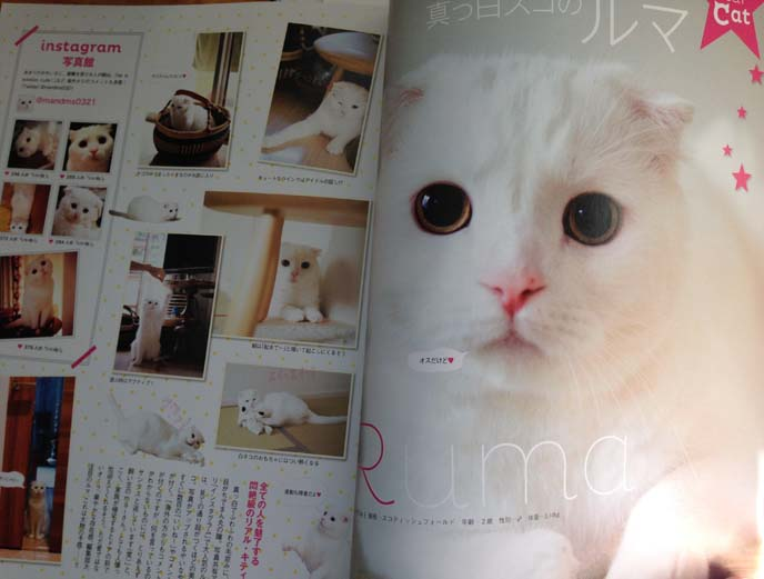 crea cat magazine japan