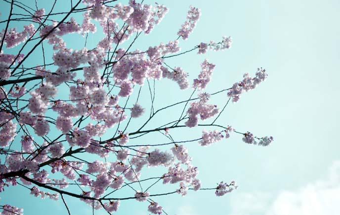 spring pink flower celebration