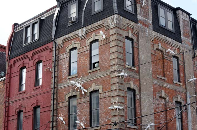 cameron house, insects on building toronto