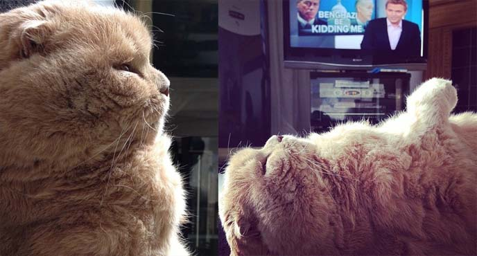 ronan farrow cat, daily tv show msnbc