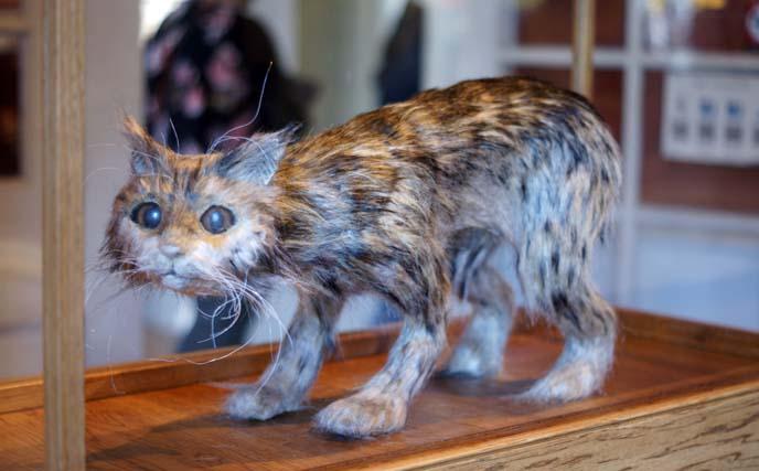 taxidermy stuffed cat