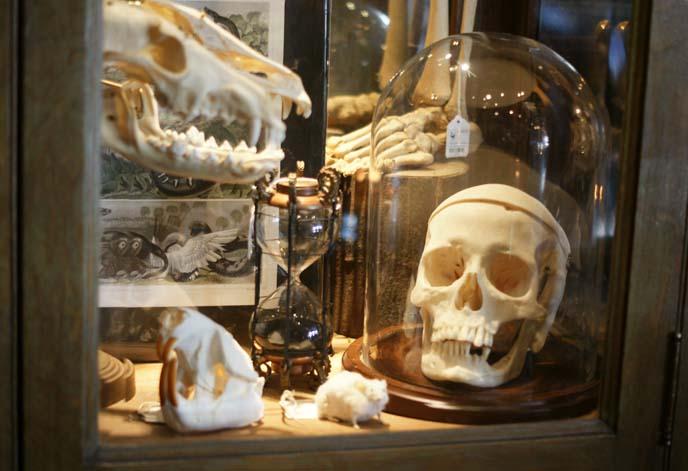 skulls in glass case