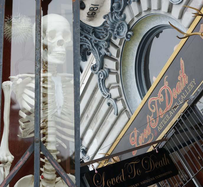 oddities san francisco shop
