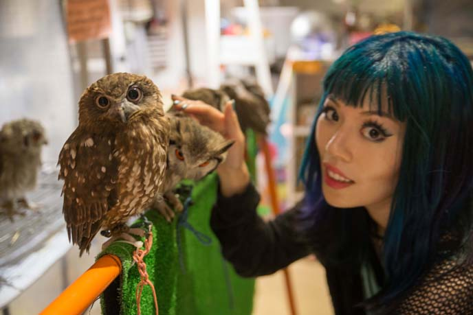 japan owl cafe interior