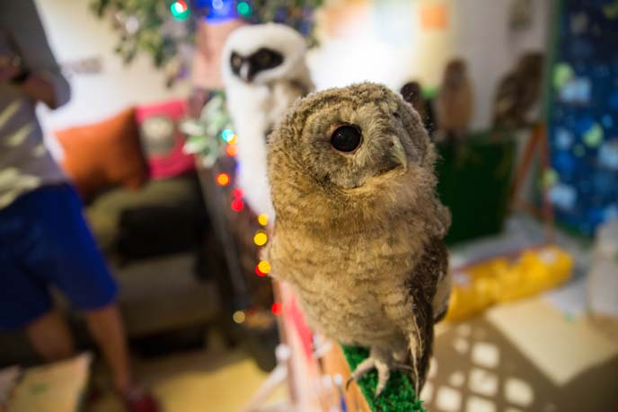 owl petting theme cafe, japan