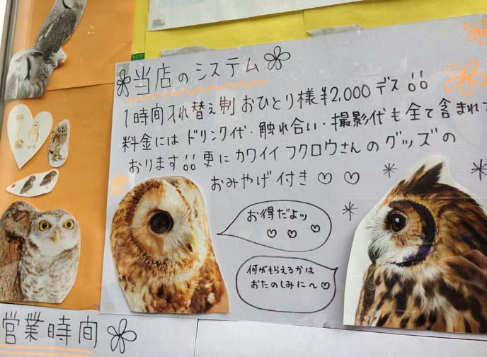 tokyo owl cafe entry fee, opening hours