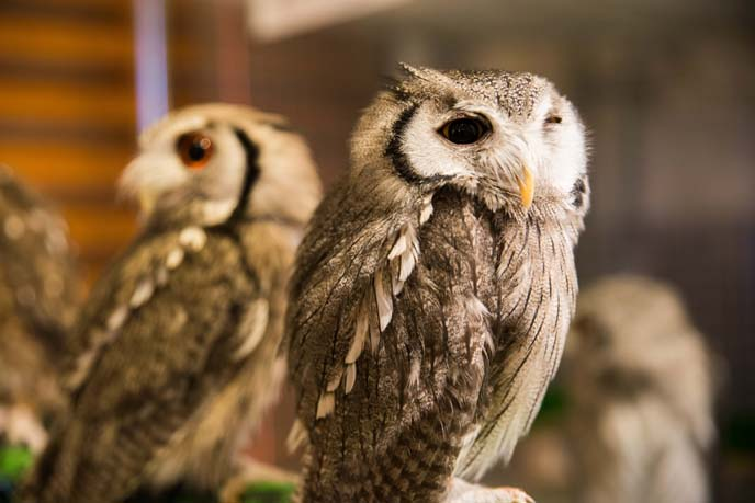 tokyo owl themed cafe