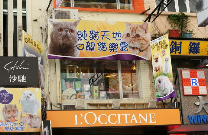 cat pet store hong kong