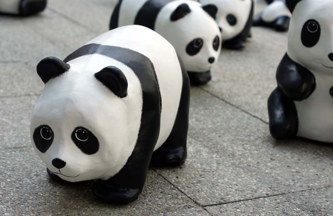 1600 pandas tour
