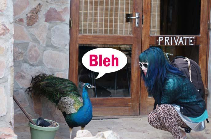 peacock and girl