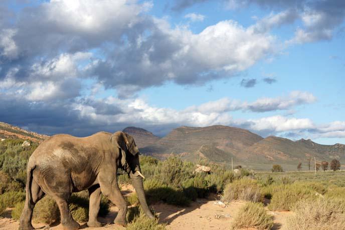 elephant walking to mountains