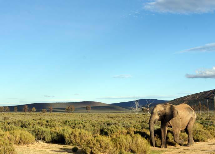 elephant park, Western Cape africa