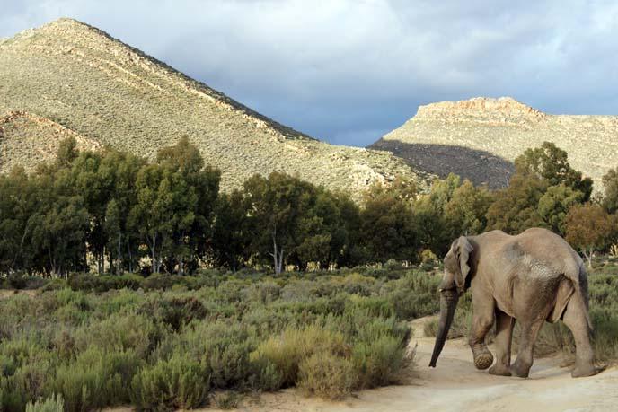elephant sanctuary south africa