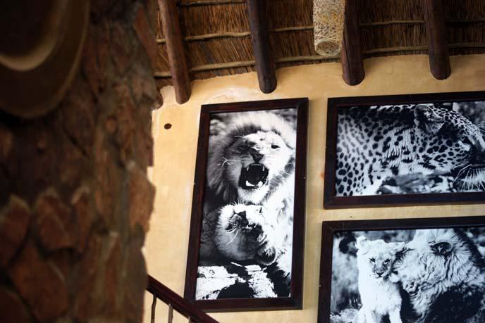 safari chalet south african