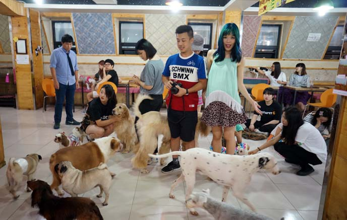 korean dog petting cafe