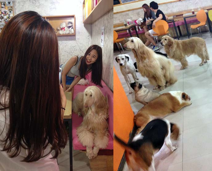 bau house hongdae dog cafe
