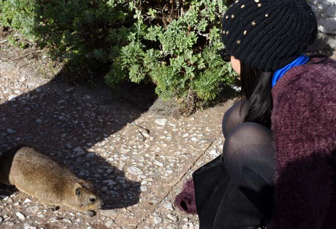 touching wild animals