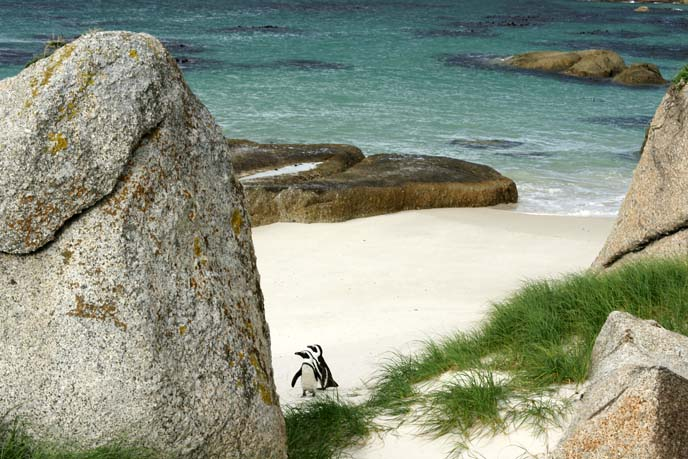 cape point boulders beach
