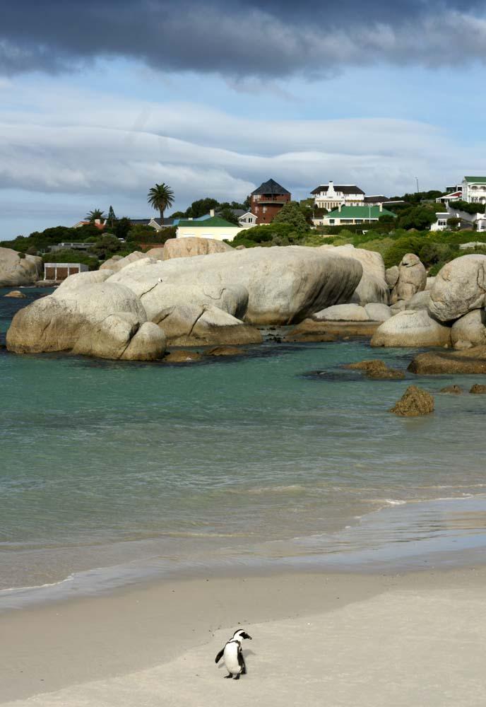 penguins, cape point beach