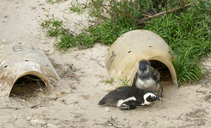 baby penguin cave