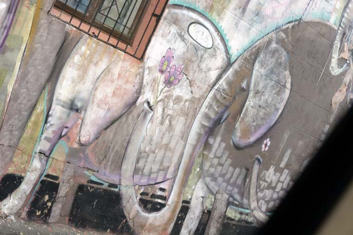cute elephants urban art