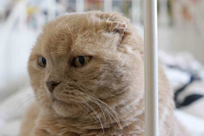 round fat face cat
