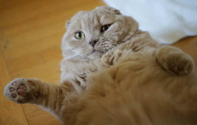 ronan farrow pet cat