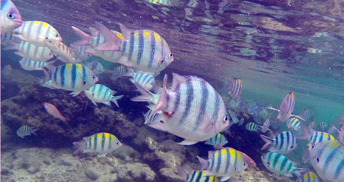 tropical fish gopro underwater