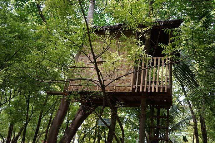 asia jungle treehouse