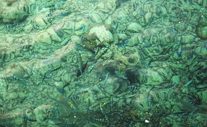 snorkeling fish underwater