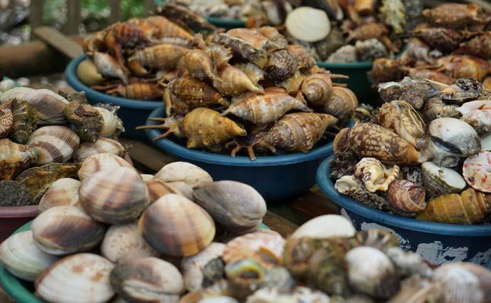 philippines shellfish