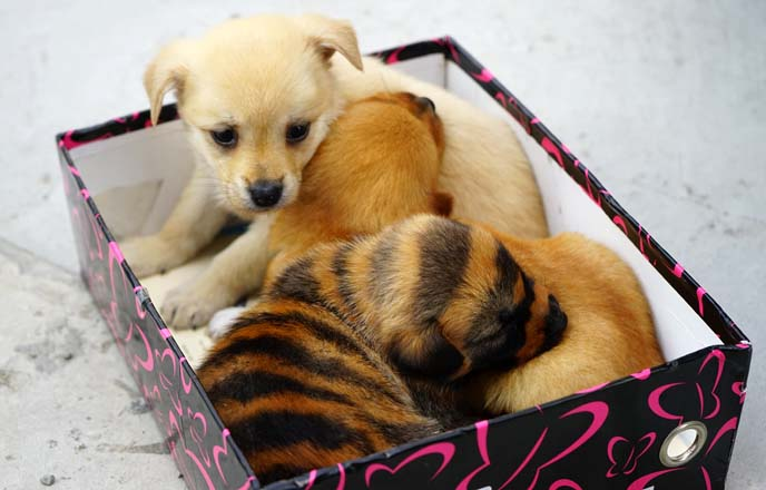 puppies dyed with stripes