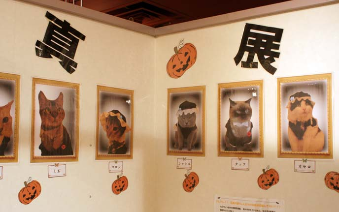 cat cafe decoration, furniture