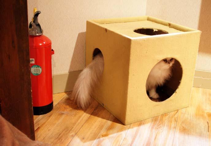 cat in a boxo