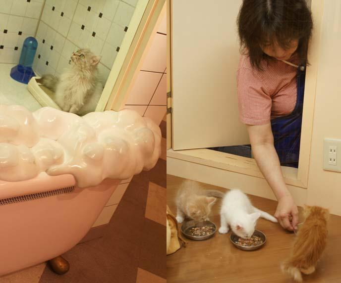 cat petting zoo