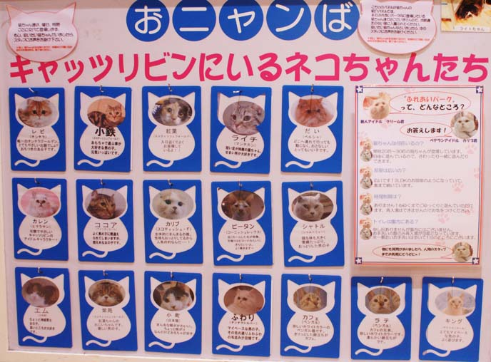 cat cafe signs, names