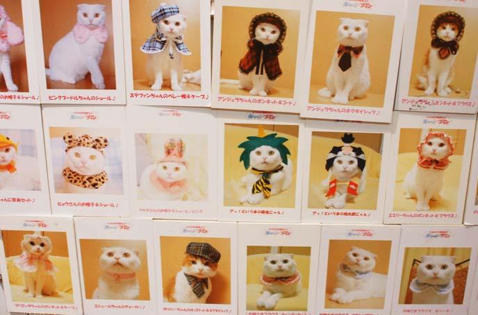white scottish fold cat, costumes