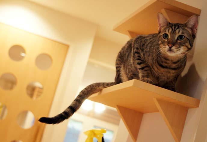 cat shelves, climbing ladders
