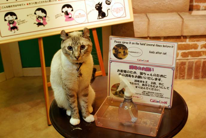 japan cat cafe rule
