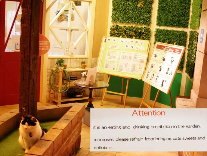 cats livin cat cafe, tokyo