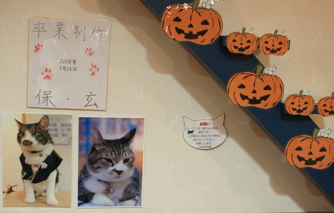 japan biggest cat cafe