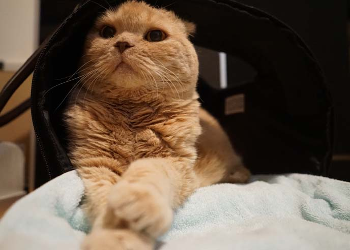 luxury cat pet carrier